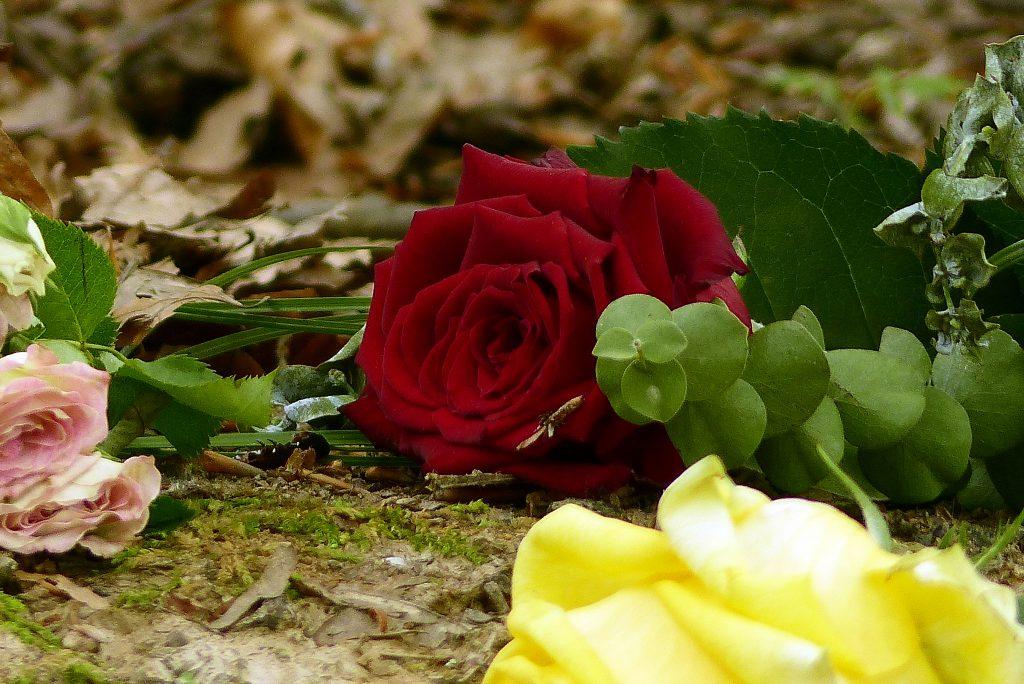 Condoléances Joindre Une Carte Avec Les Fleurs Des Obsèques