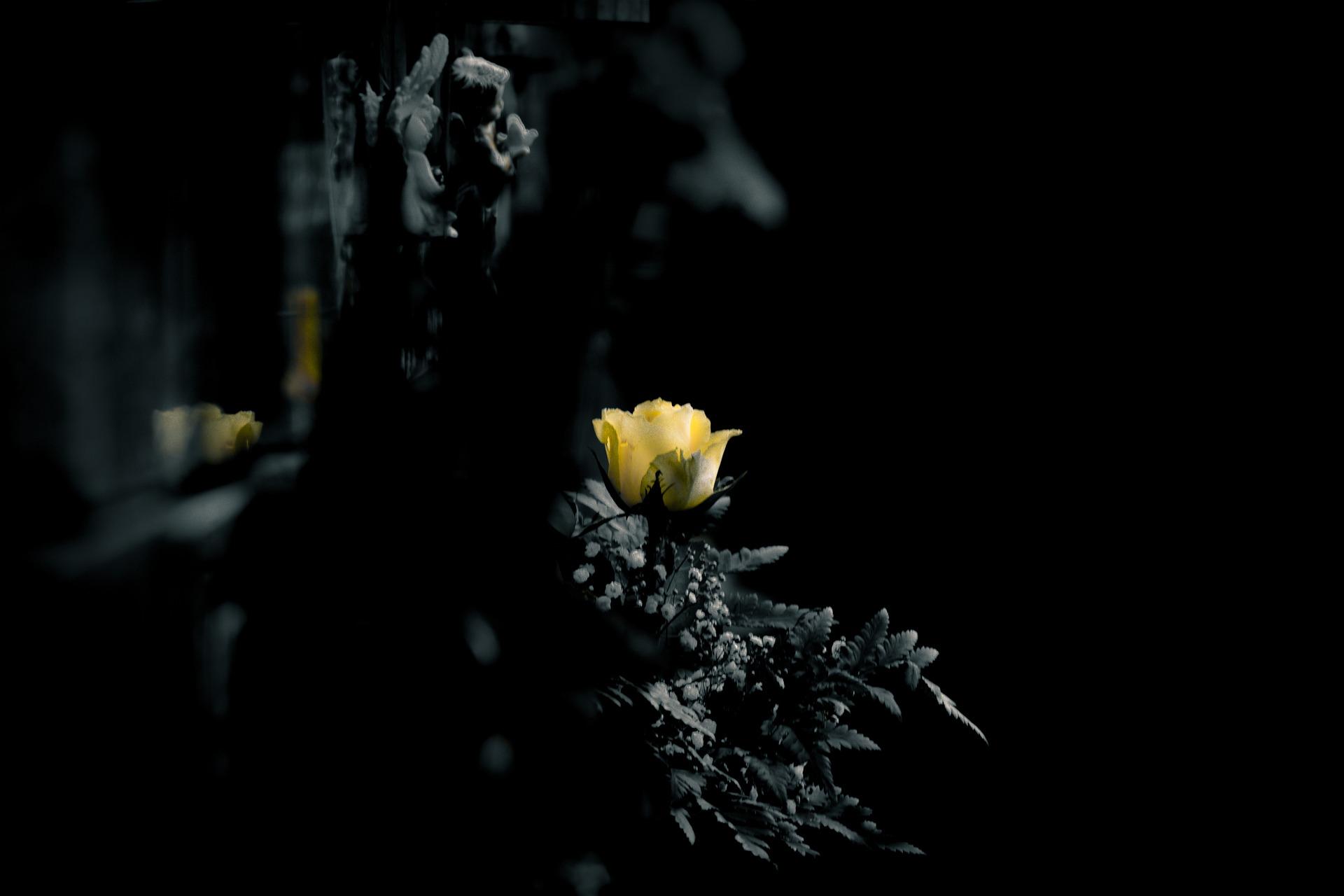 choisir des fleurs d 39 enterrement pour un jeune des obs ques. Black Bedroom Furniture Sets. Home Design Ideas