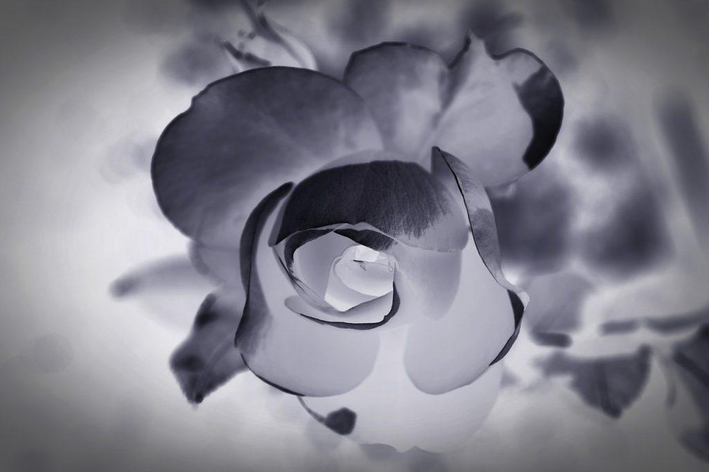 Condoléances 20 Textes Pour Accompagner Des Fleurs Des