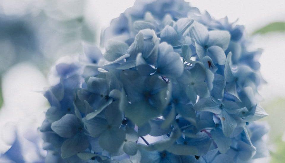 Il y a des choses à éviter quand vous envoyez des fleurs de deuil